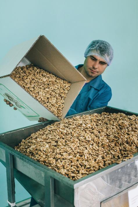 парень высыпает из коробки в шнек ядро грецкого ореха